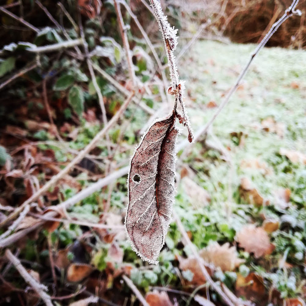 feuille-gelee-matin-hiver